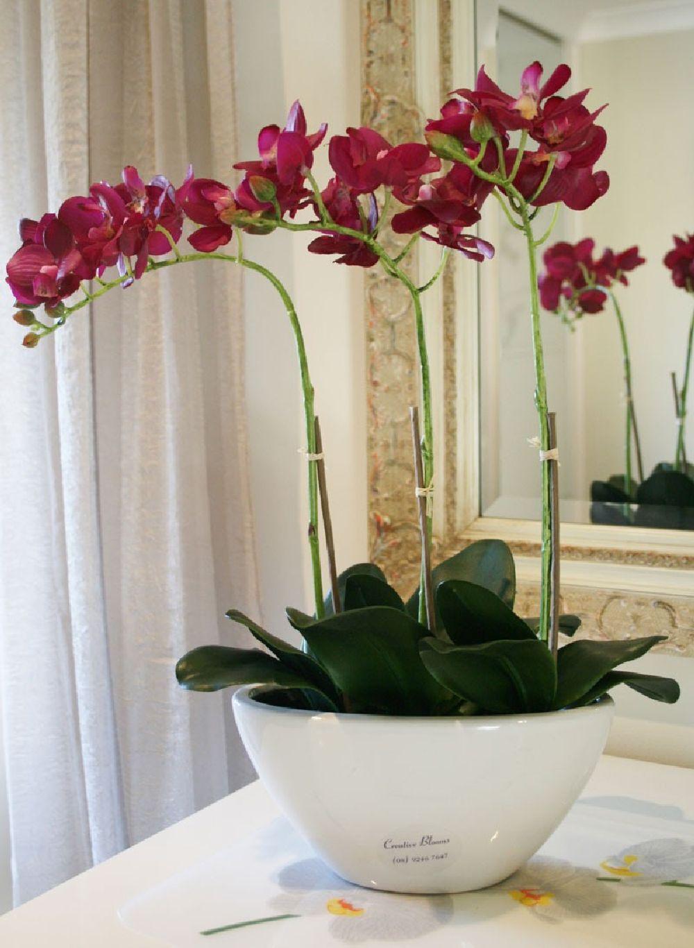 adelaparvu.com despre tratamentul pentru orhideea cu radacini putrezite si frunze ingalbenite, Text Carli Marian (7)