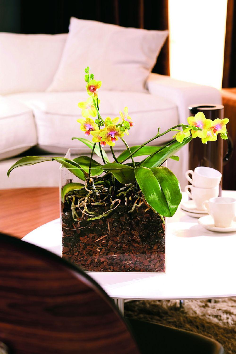 adelaparvu.com despre schimbarea ghiveciului la orhidee, Foto Floradania (3)