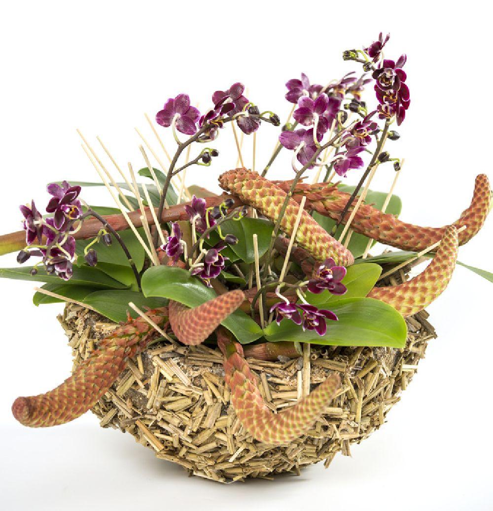 adelaparvu.com despre schimbarea ghiveciului la orhidee, Foto Floradania (5)