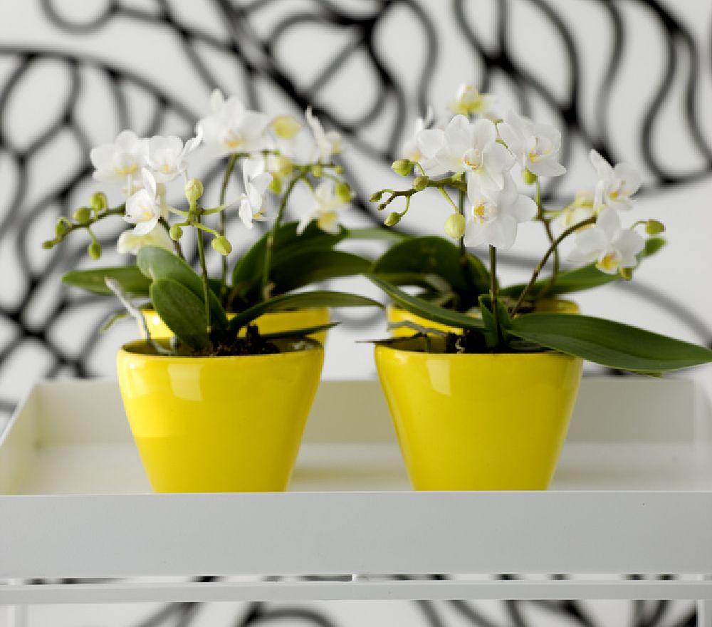adelaparvu.com despre schimbarea ghiveciului la orhidee, Foto Floradania (6)