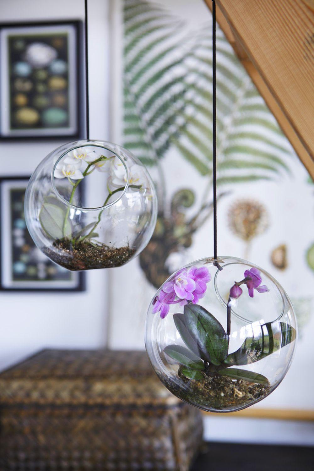 adelaparvu.com despre schimbarea ghiveciului la orhidee, Foto Floradania (7)