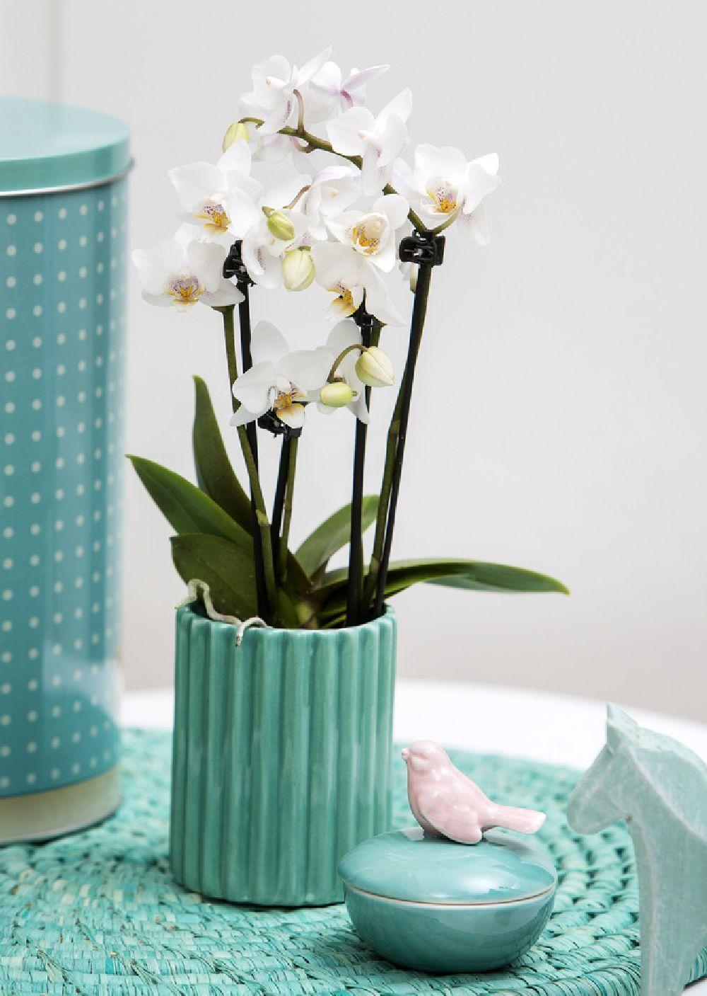 adelaparvu.com despre schimbarea ghiveciului la orhidee, Foto Floradania (8)