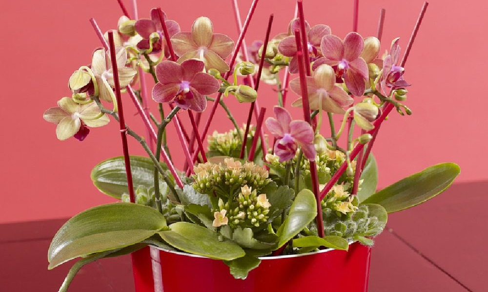 adelaparvu.com despre schimbarea ghiveciului la orhidee, Foto Floradania (9)