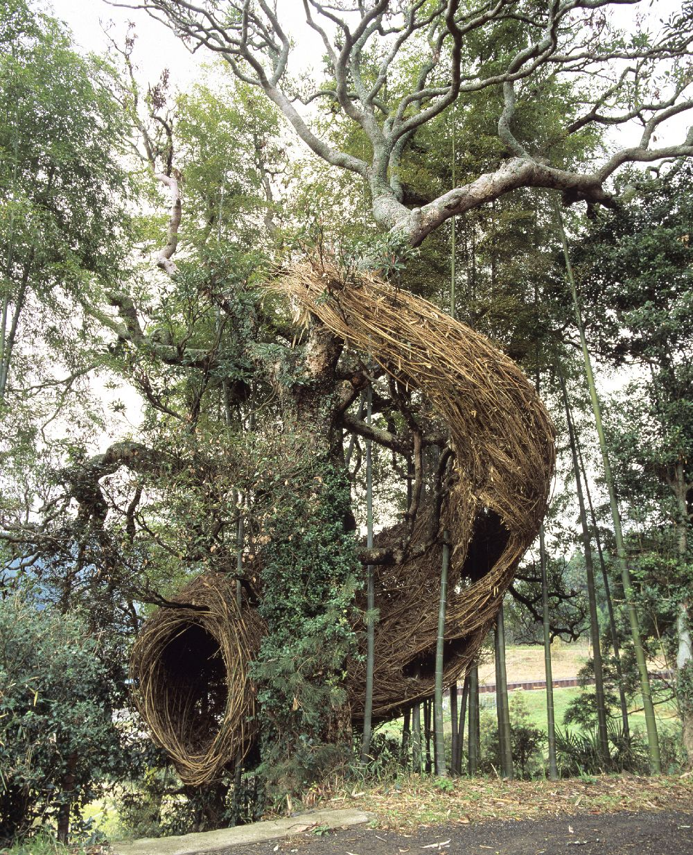 artist Patrick Dougherty, lucrare Holy Rope