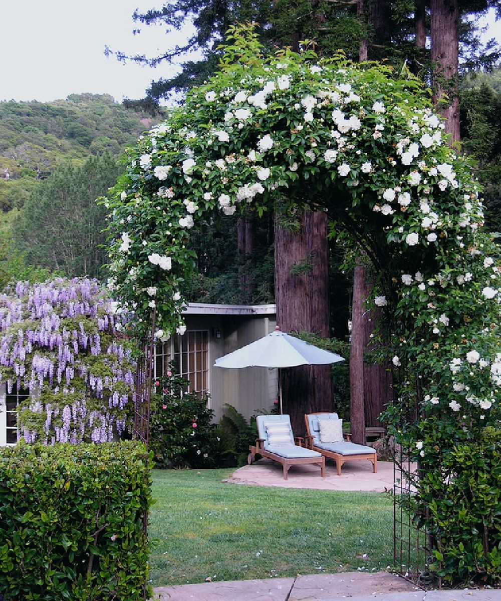adelaparvu.com despre 5 sfaturi pentru trandafiri cataratori, Text Carli Marian, Foto Derviss Design