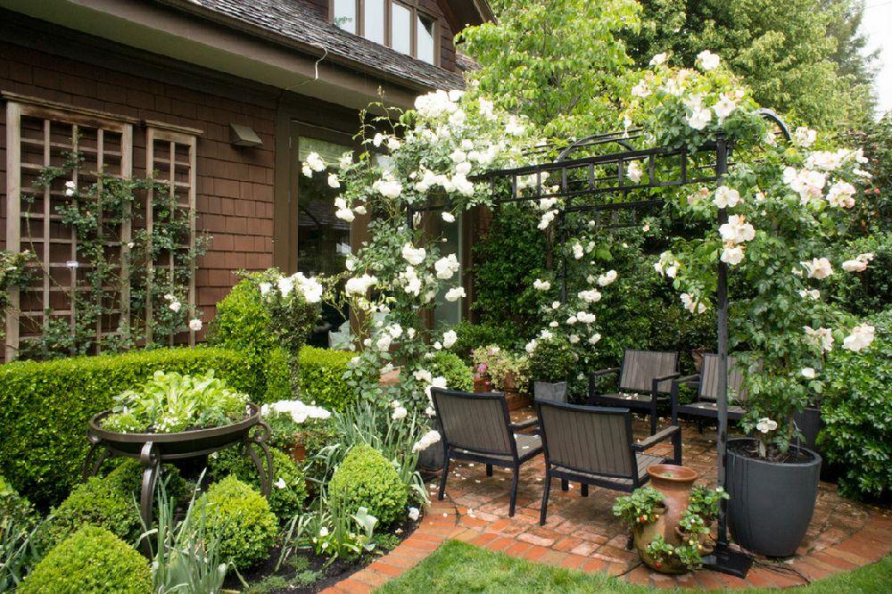 adelaparvu.com despre 5 sfaturi pentru trandafiri cataratori, Text Carli Marian, Foto Hoi Ning Wong