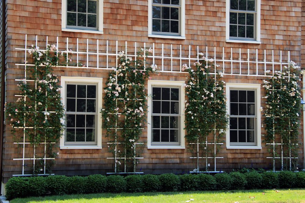 adelaparvu.com despre 5 sfaturi pentru trandafiri cataratori, Text Carli Marian, Foto Lear & Mahoney Landscape Associates