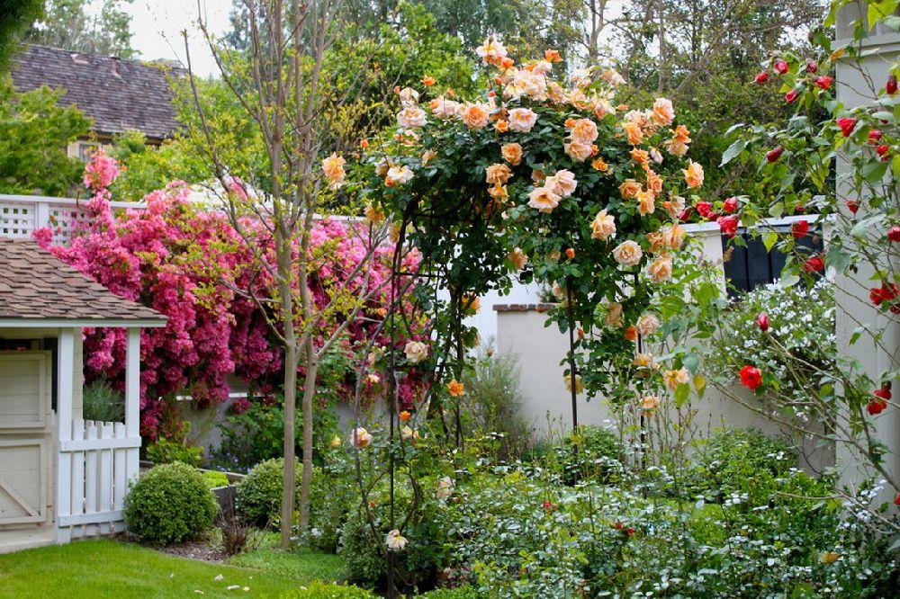 adelaparvu.com despre 5 sfaturi pentru trandafiri cataratori, Text Carli Marian, Foto Marie Gamboa