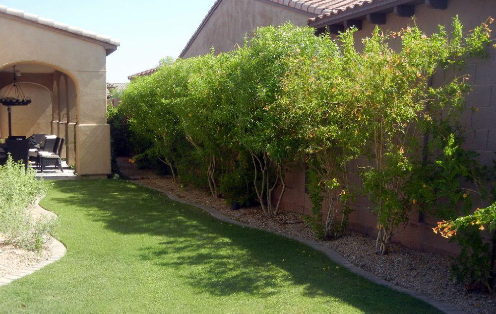 adelaparvu.com despre Nerium Oleander, leandrul potrivit in gradina si pe balcon, Text Carli Marian (1)