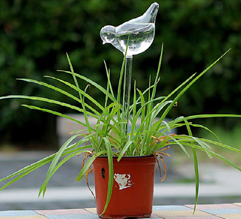 adelaparvu.com despre cum uzi plantele cand pleci in vacanta, Text Carli Marian (3)