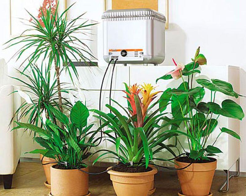 adelaparvu.com despre cum uzi plantele cand pleci in vacanta, Text Carli Marian (6)