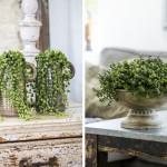 adelaparvu.com despre plante decorative deosebite, Text Carli Marian, Foto Floradania