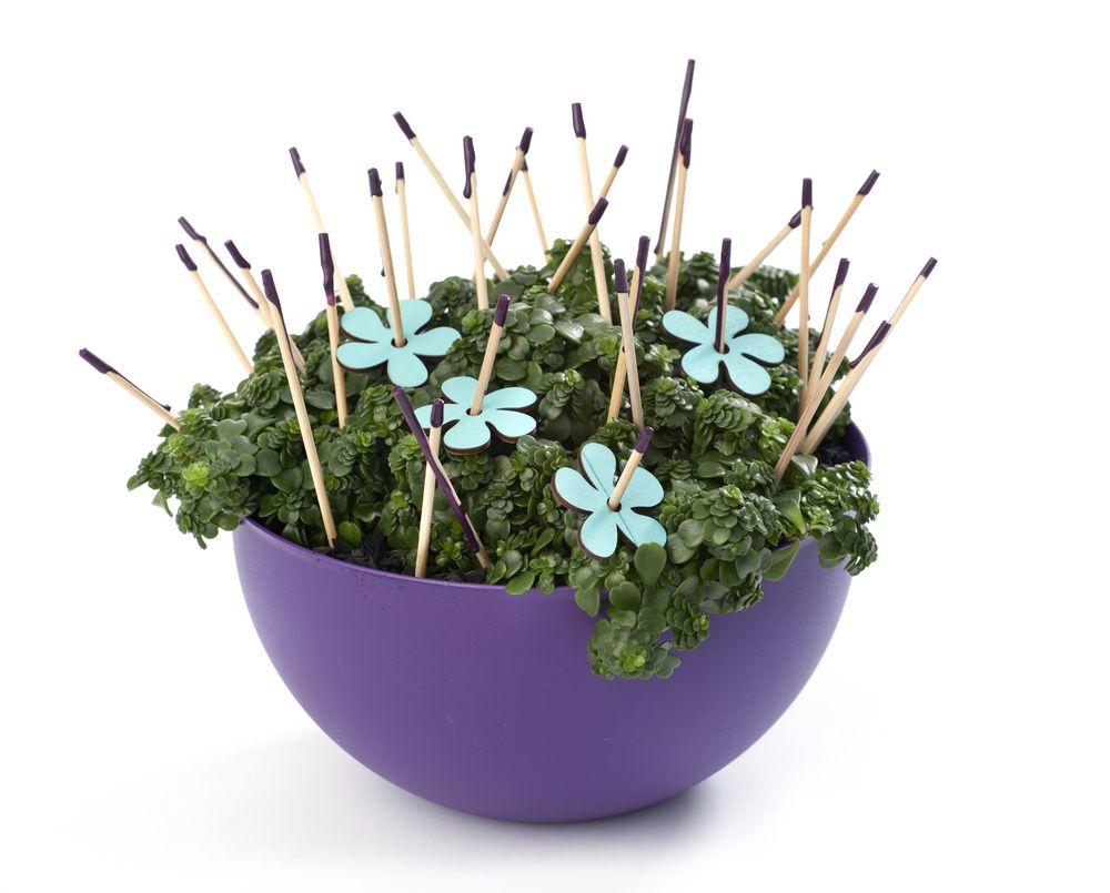 adelaparvu.com despre plante la ghiveci deosebite, Text Carli Marian, In foto Sedum makinoi, Foto Floradania (2)