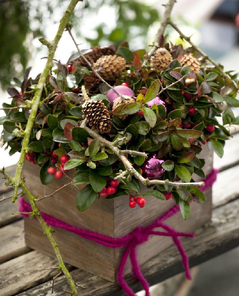 adelaparvu.com despre Gaultheria procumbens, Text Carli Marian, Foto Floradania (1)
