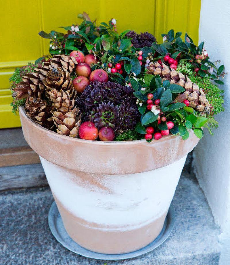 adelaparvu.com despre Gaultheria procumbens, Text Carli Marian, Foto Floradania (11)