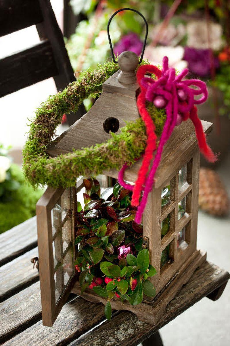 adelaparvu.com despre Gaultheria procumbens, Text Carli Marian, Foto Floradania (14)