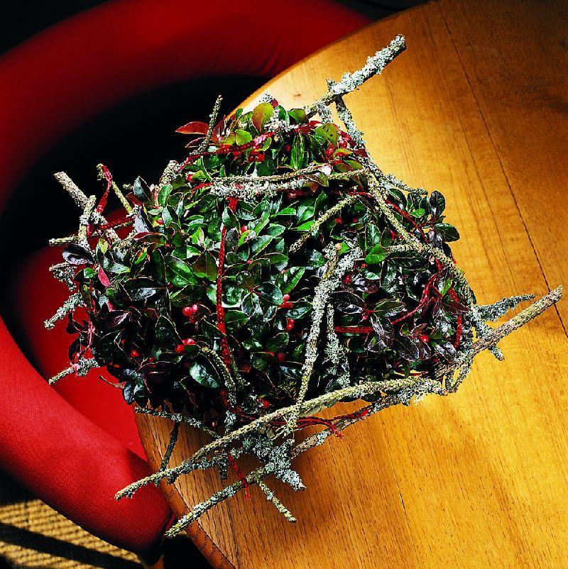 adelaparvu.com despre Gaultheria procumbens, Text Carli Marian, Foto Floradania (8)