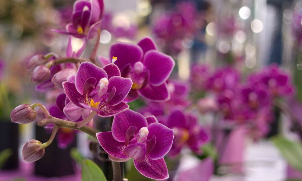 adelaparvu.com top 10 cele mai citite articole despre flori, plante, gradini in 2015 (1)