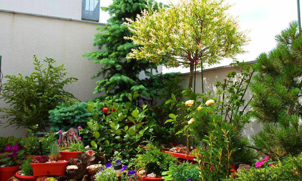adelaparvu.com top 10 cele mai citite articole despre flori, plante, gradini in 2015 (10)