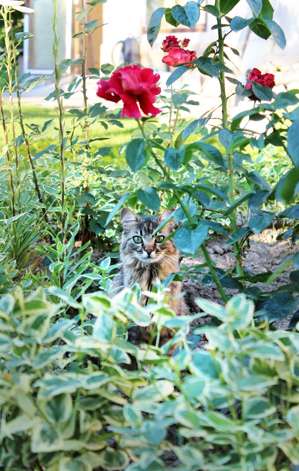 adelaparvu.com despre Garden Studio Timisoara, garsoniera 35 mp cu gradina, design Alexandru Damian si Olimpia Onci (6)