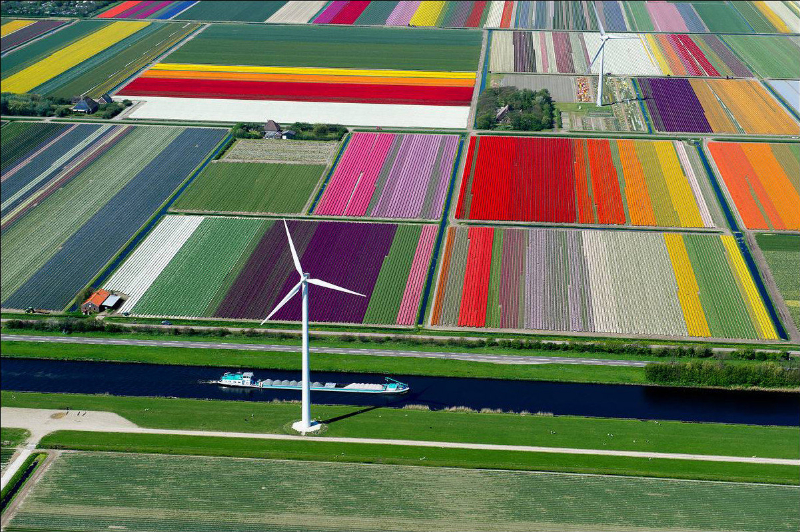 adelaparvu.com despre drumul lalelelor de la cultivare la recoltare, Sera Munster Olanda,Text Carli Marian (3)