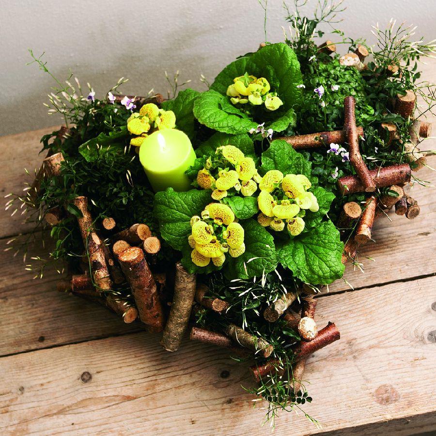 adelaparvu.com despre Calceolaria sau Papucul doamnei, Text Carli Marian, Foto Floradania (6)