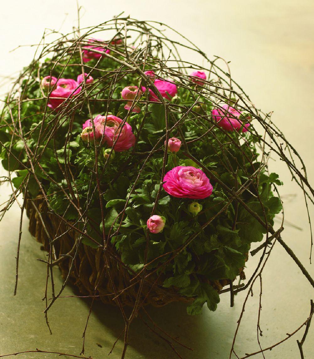 adelaparvu.com despre Ranunculus, Text Carli Marian, Foto Floradania (3)