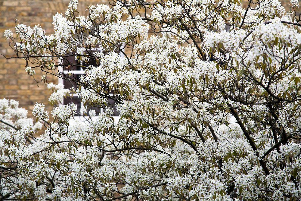 adelaparvu.com despre gradini mici si elegante, Gradina Bedford Gardens, designer Luciano Giubbilei (4)