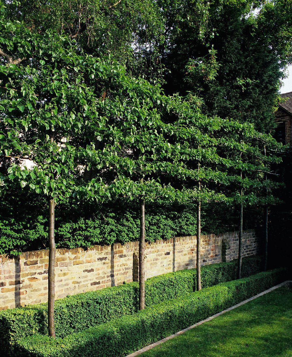 adelaparvu.com despre gradini mici si elegante, Gradina Kensington Gardens, designer Luciano Giubbilei (3)