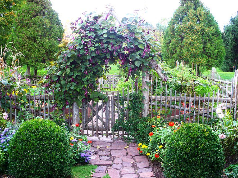 adelaparvu.com despre fasolea cataratoare, Hyacinth Bean, Text Carli Marian, Foto Dear Garden(3)