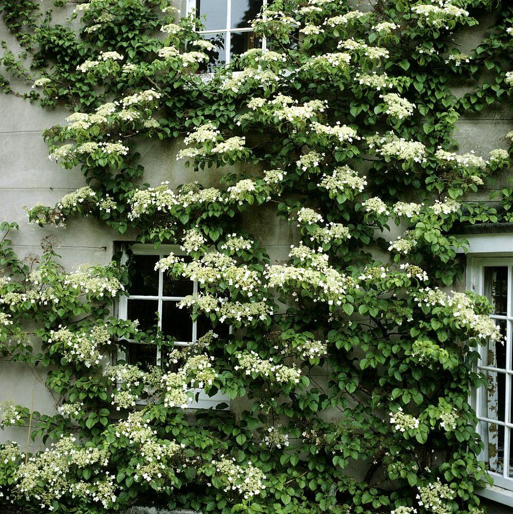 Foto jardinage.ooreka.fr