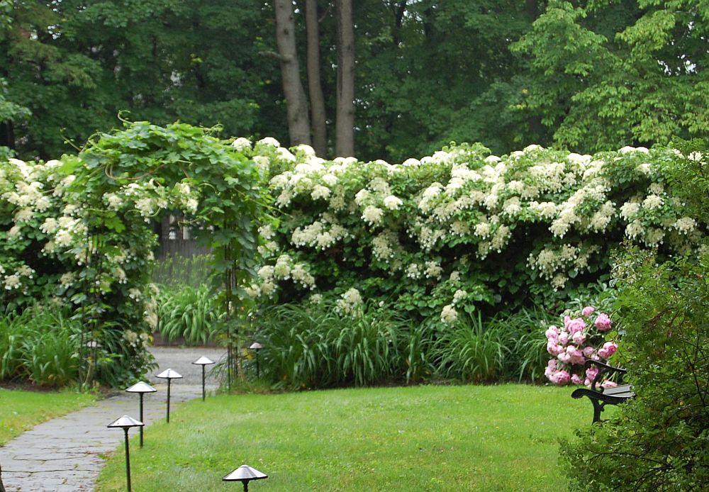 Foto thewelldressedgarden.com
