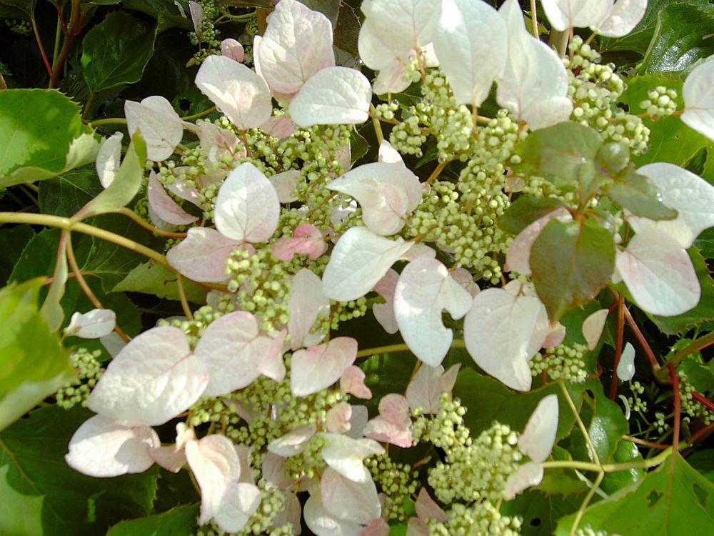 Foto www.donnadipiante.com