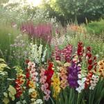 adelaparvu.com despre top 10 plante bulboase de vara, Text Carli Marian, in Foto Gladiolus