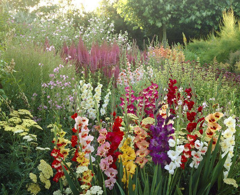 Top 10 Flori Bulboase De Vară Care Se Plantează In Aprilie Adela