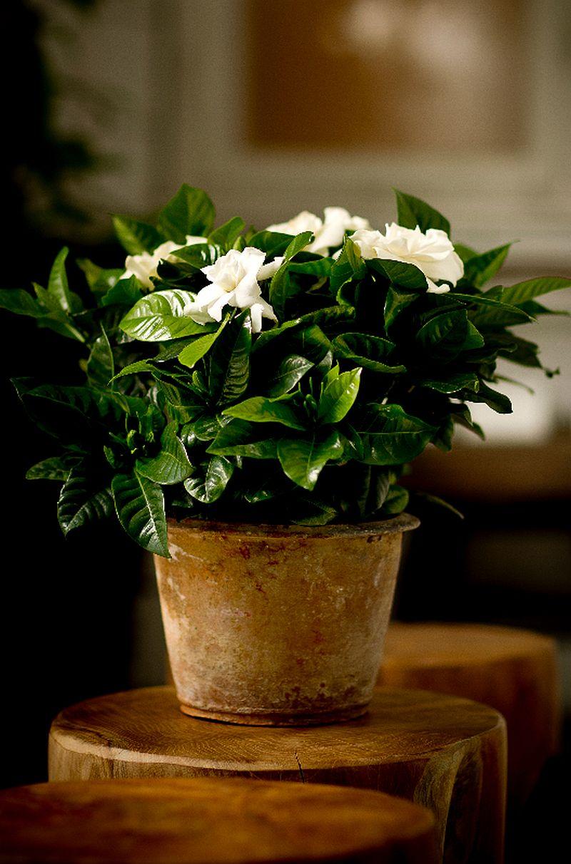 adelaparvu.com despre caderea bobocilor la Gardenia, Text Carli Marian, Foto Floradania (4)