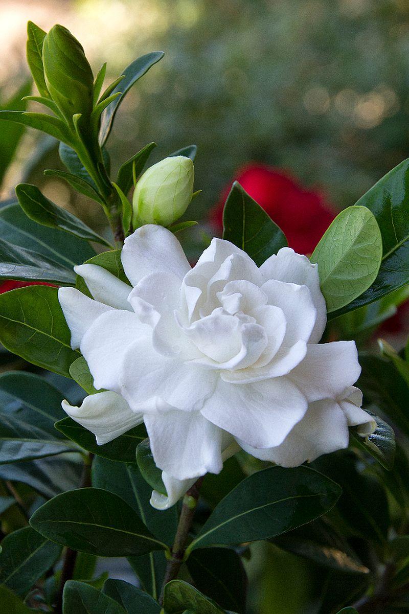 adelaparvu.com despre caderea bobocilor la Gardenia, Text Carli Marian, Foto Gardenphotos (1)