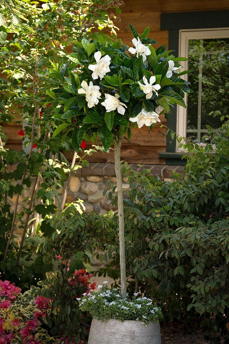 adelaparvu.com despre caderea bobocilor la Gardenia, Text Carli Marian, Foto Moravia (2)