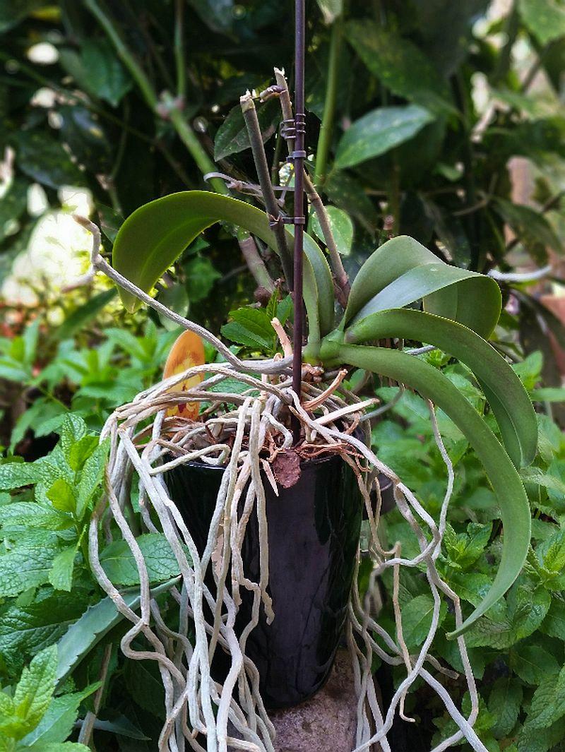 adelaparvu.com despre fertilizant orhidee, Pokon Powerspray pentru orhidee, text Carli Marian (4)