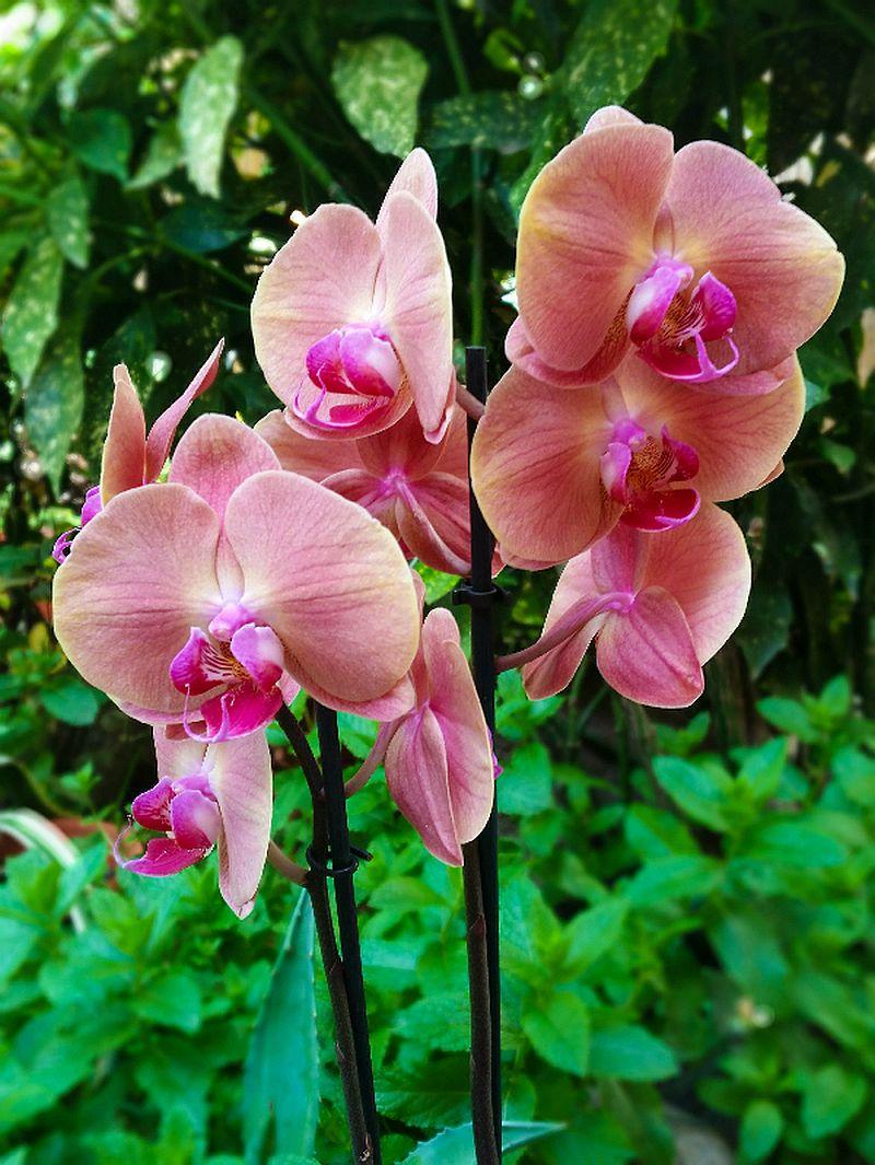 adelaparvu.com despre fertilizant orhidee, Pokon Powerspray pentru orhidee, text Carli Marian (5)
