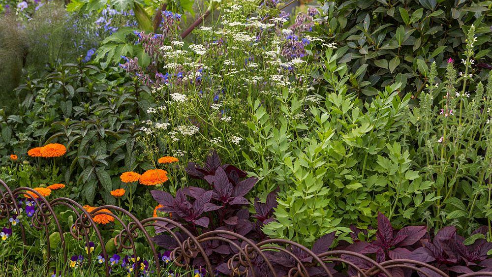 adelaparvu.com despre gradina cu plante medicinale, designer Jekka McVicar, A Modern Apothecary Garden, RHS Chelsea Flower Show 2016 (15)