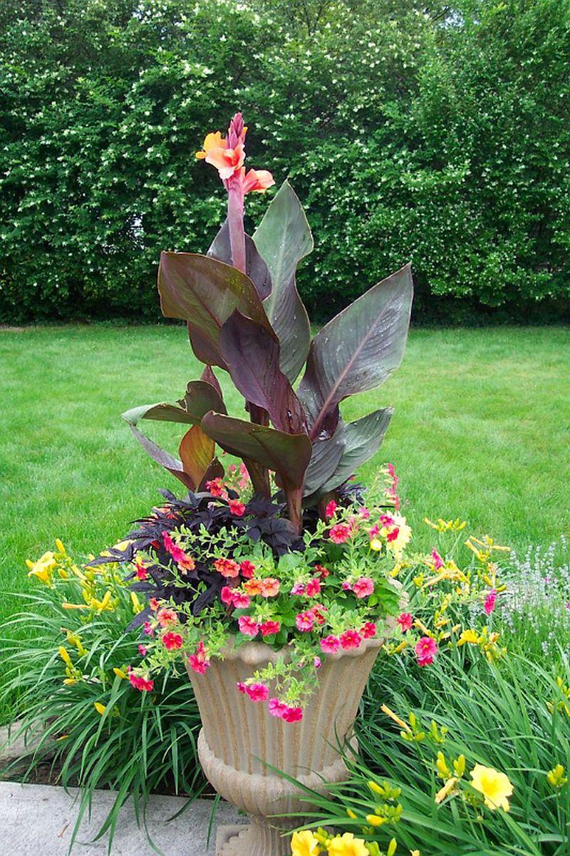 adelaparvu.com despre Canna indica planta cu flori, seminte pentru bijuterii (6)