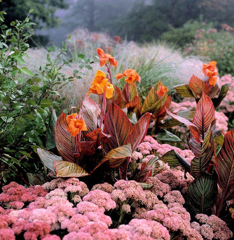 adelaparvu.com despre Canna indica planta cu flori, seminte pentru bijuterii (9)