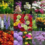 adelaparvu.com despre plante anuale cu flori care se autoinmultesc, Text Carli Marian