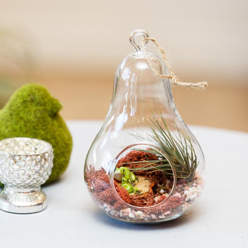 adelaparvu.com despre flori de aer in globuri de sticla, Text Carli Marian (2)