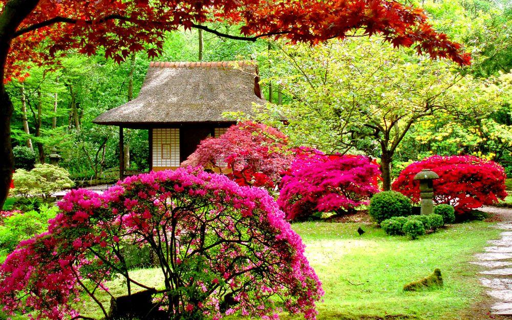 adelaparvu-com-despre-plantarea-copacilor-si-pomilor-in-gradina-text-carli-marian-8
