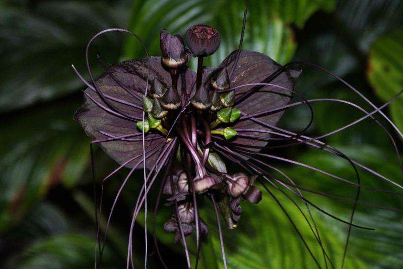 adelaparvu-com-despre-planta-liliac-sau-frumusetea-intunericului-text-carli-marian-1