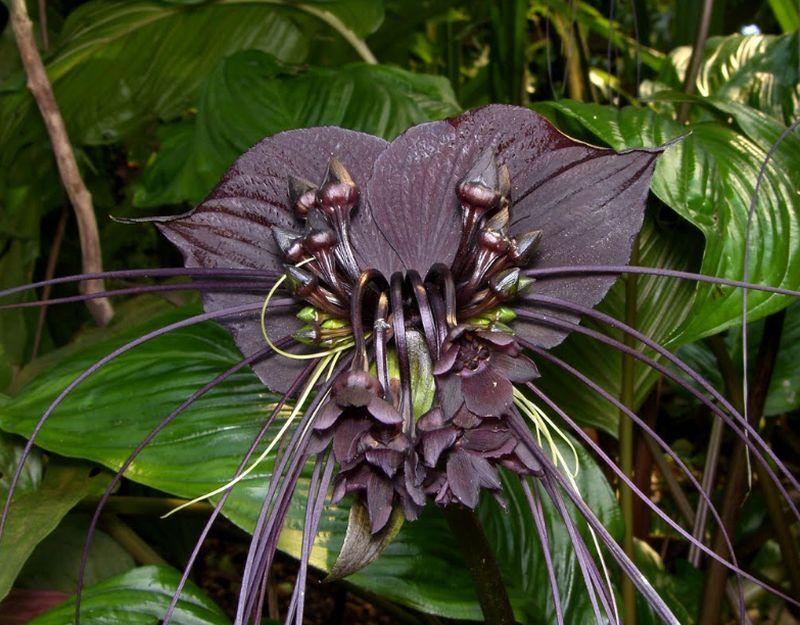 adelaparvu-com-despre-planta-liliac-sau-frumusetea-intunericului-text-carli-marian-2