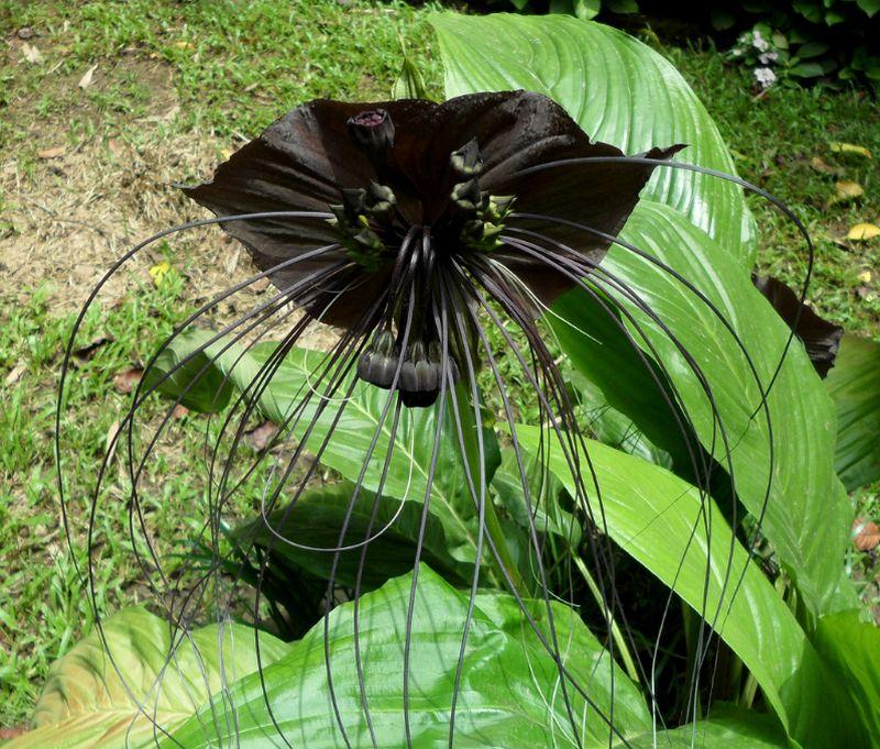 adelaparvu-com-despre-planta-liliac-sau-frumusetea-intunericului-text-carli-marian-3
