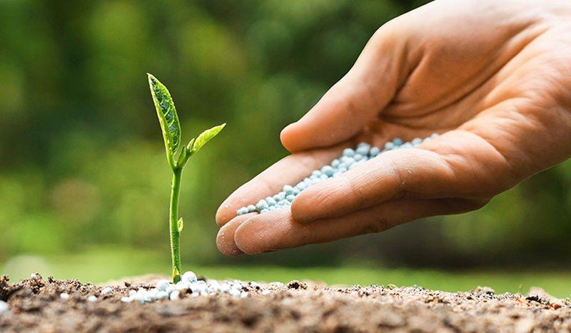 Poți ajuta pentru cauze de mediu votând AICI